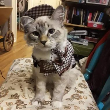 detective Kitten
