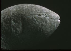 sanfranciscofish