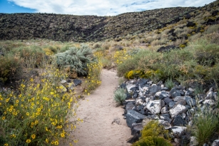Image of Boca Negra Canyon trail showing rocks and wildflowers, with hills in the background.
