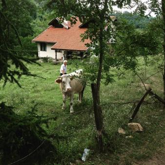 Image of a white cow in the foreground, standing in a field behind some trees. Behind her is a farmer, and a house with a red clay tiled roof.